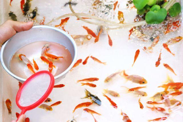 金魚すくい 紙 ポイ